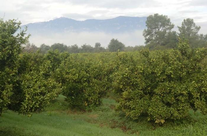 Mandariners i les montanyes